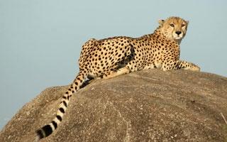 Northern Tanzania Safaris | Tanzania | The Africa Specialists™