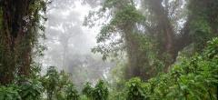 The Volcanoes National Park