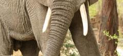 Itineary photo - elephant