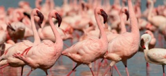 Itinerary photo - flamingos