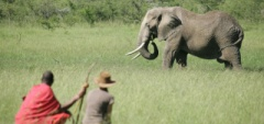 Naboisho Camp - Elephant