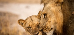 Zambia - south luangwa national park