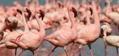 Itinerary photo - flamingos