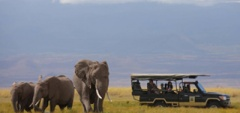 Family safari - Amboseli