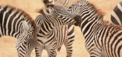 Client photo - Serengeti