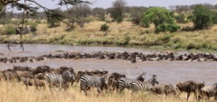 Client photo - great migration