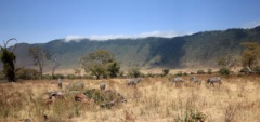 Client photo - Ngorongoro