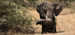 Client photo - Baby elephant