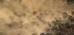 Client photo - wildebeest migration