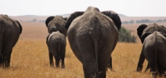Client photo - elephant herd