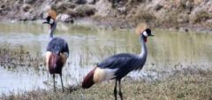 Client photo - birds