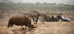 Lewa Safari Camp - rhino