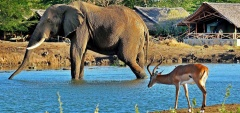Satao Camp - Wildlife in camp