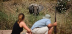 Jongomero Camp - walking safari