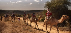 Sabuk Lodge - Camel Riding