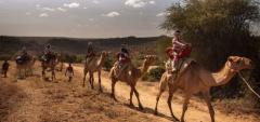 Sabuk Lodge - Camel Riding