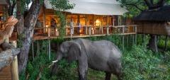 Tubu Tree - Elephant