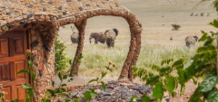 Lewa house - elephants