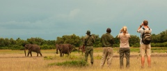 Walking Safaris in South Luangwa