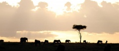Tsavo East and West