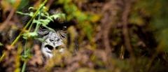 Itinerary photo - Gorilla