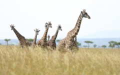Serengeti Wildlife