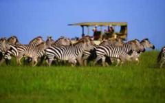 Itineary photo - Zebra