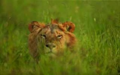 Itinerary photo - lion
