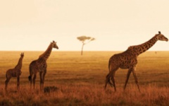 Serengeti Safari - Four Seasons