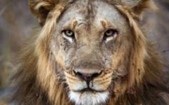 Zambia Safari - South Luangwa