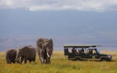 Family safari - Amboseli