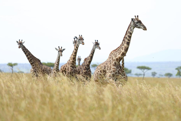 A Kenya honeymoon guide | The Africa Specialists™